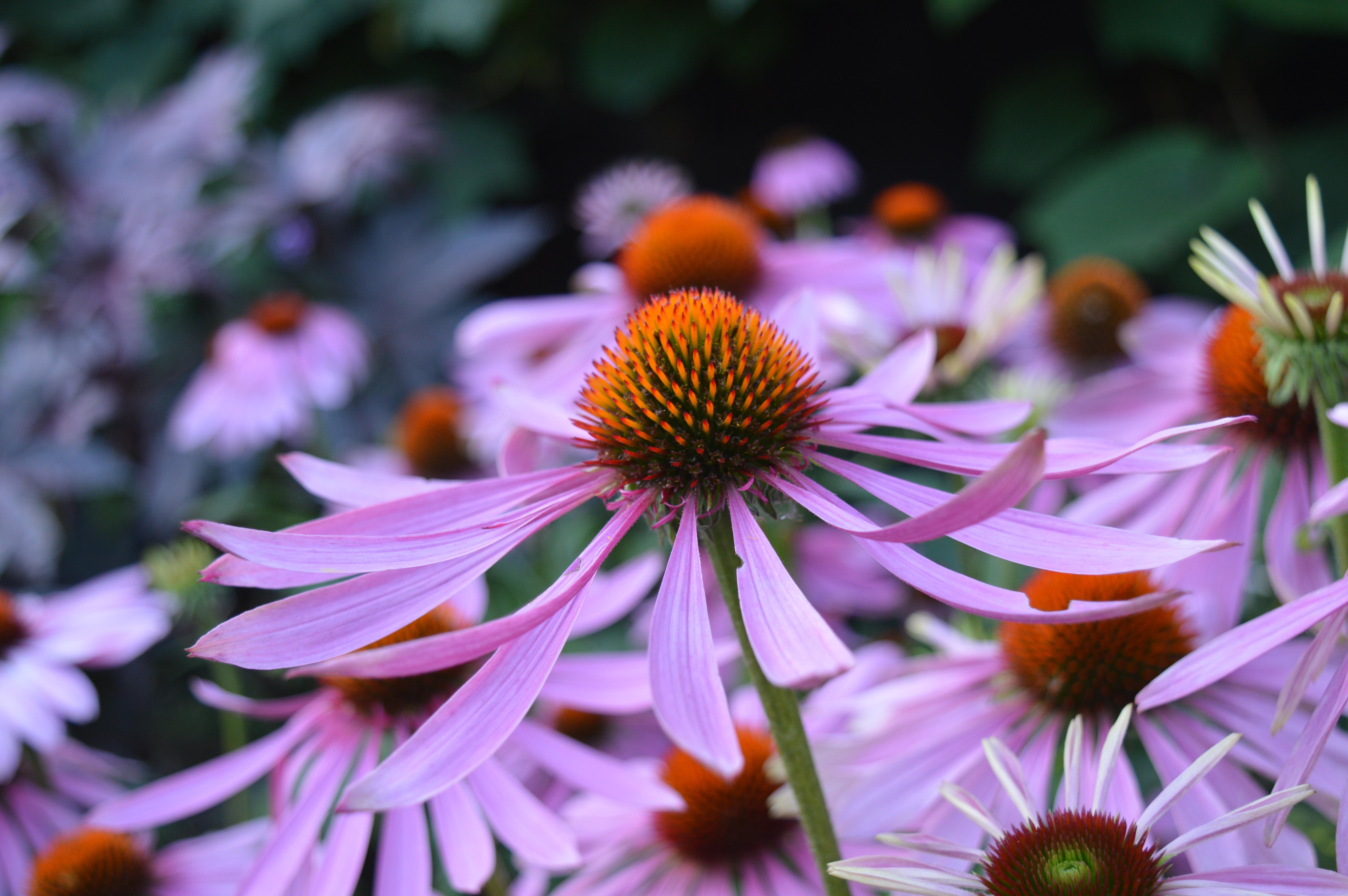 Louise Nicholls - Adventures in horticulture