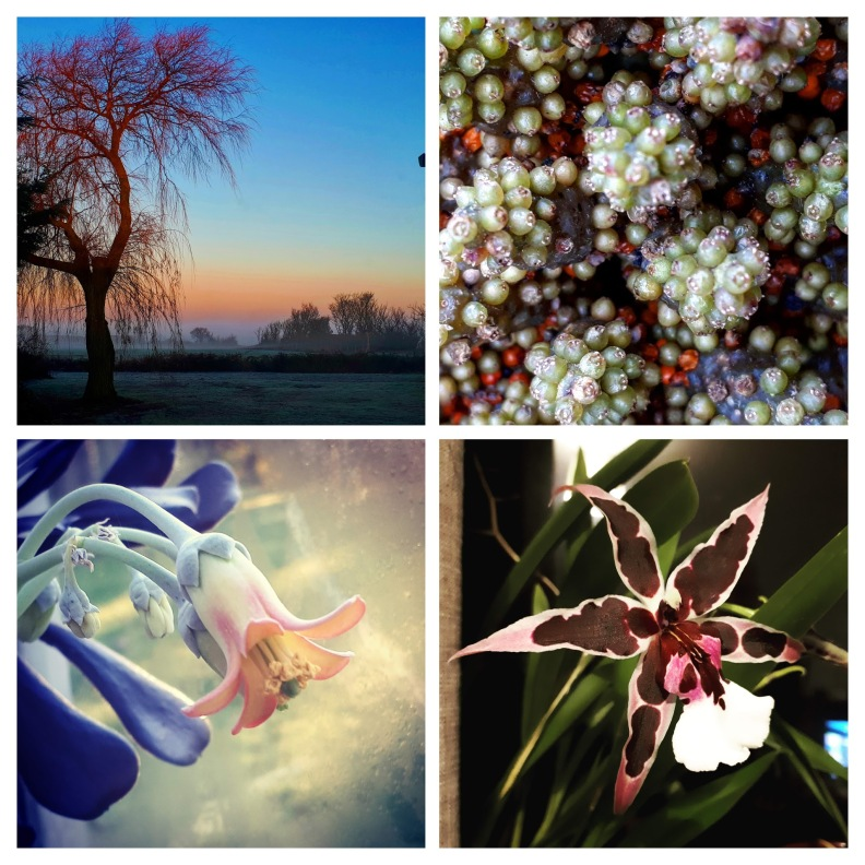 IMG_20181201_180319_872-COLLAGE